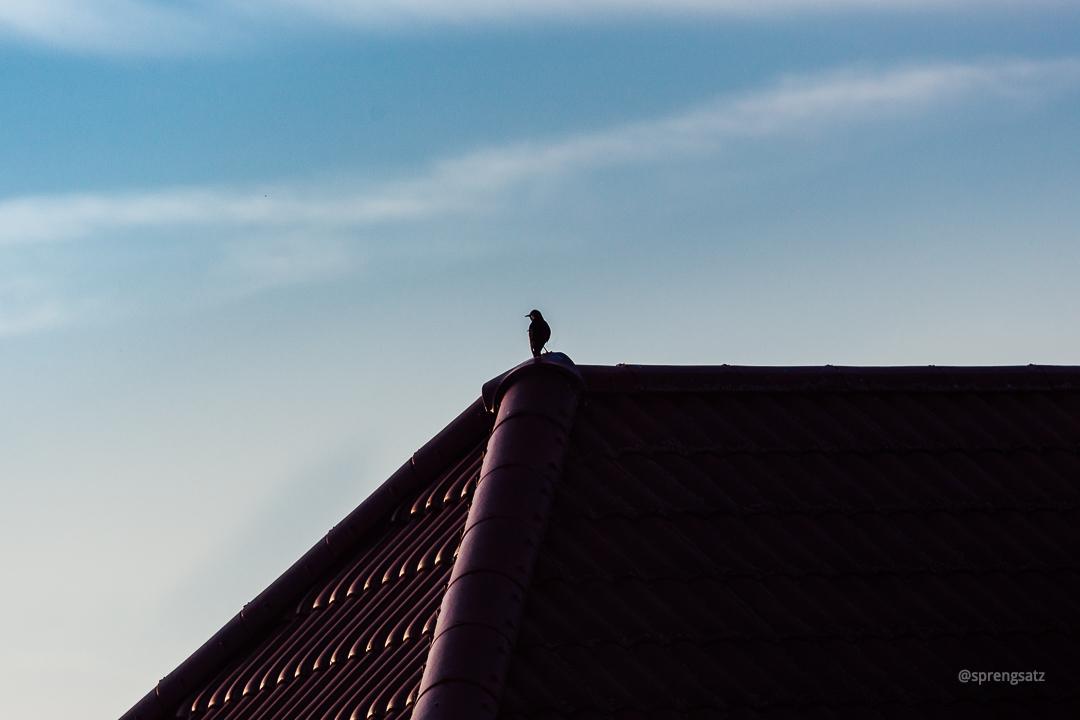 Vogel auf Hausdach