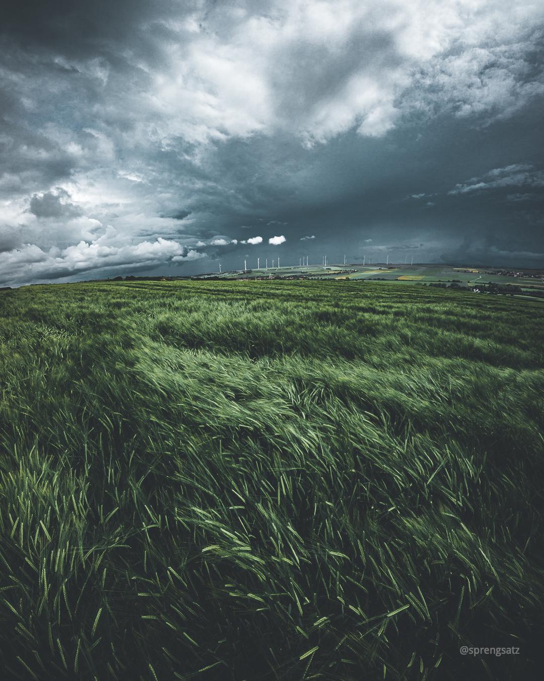 Grünes Gerstenfeld vor dramatischem Gewitterhimmel zwischen Einselthum und Stetten