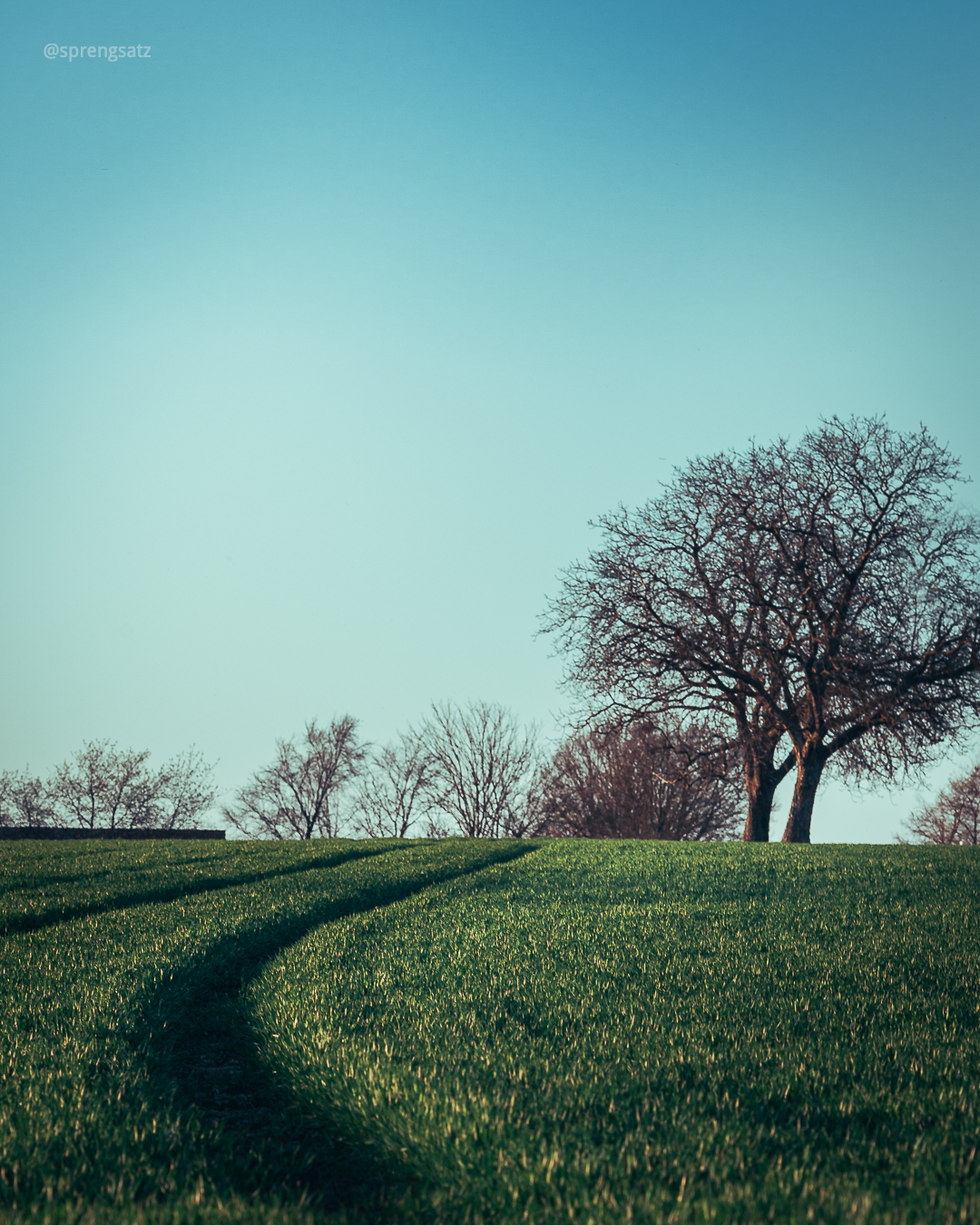 Grüne Wiese mit Baum vor blauem Himmel