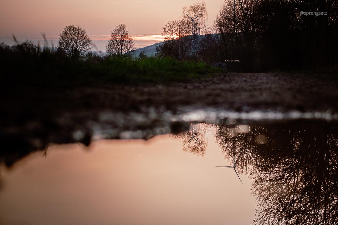 Pfütze mit Spiegelungen in der Abenddämmerung (Albisheim)