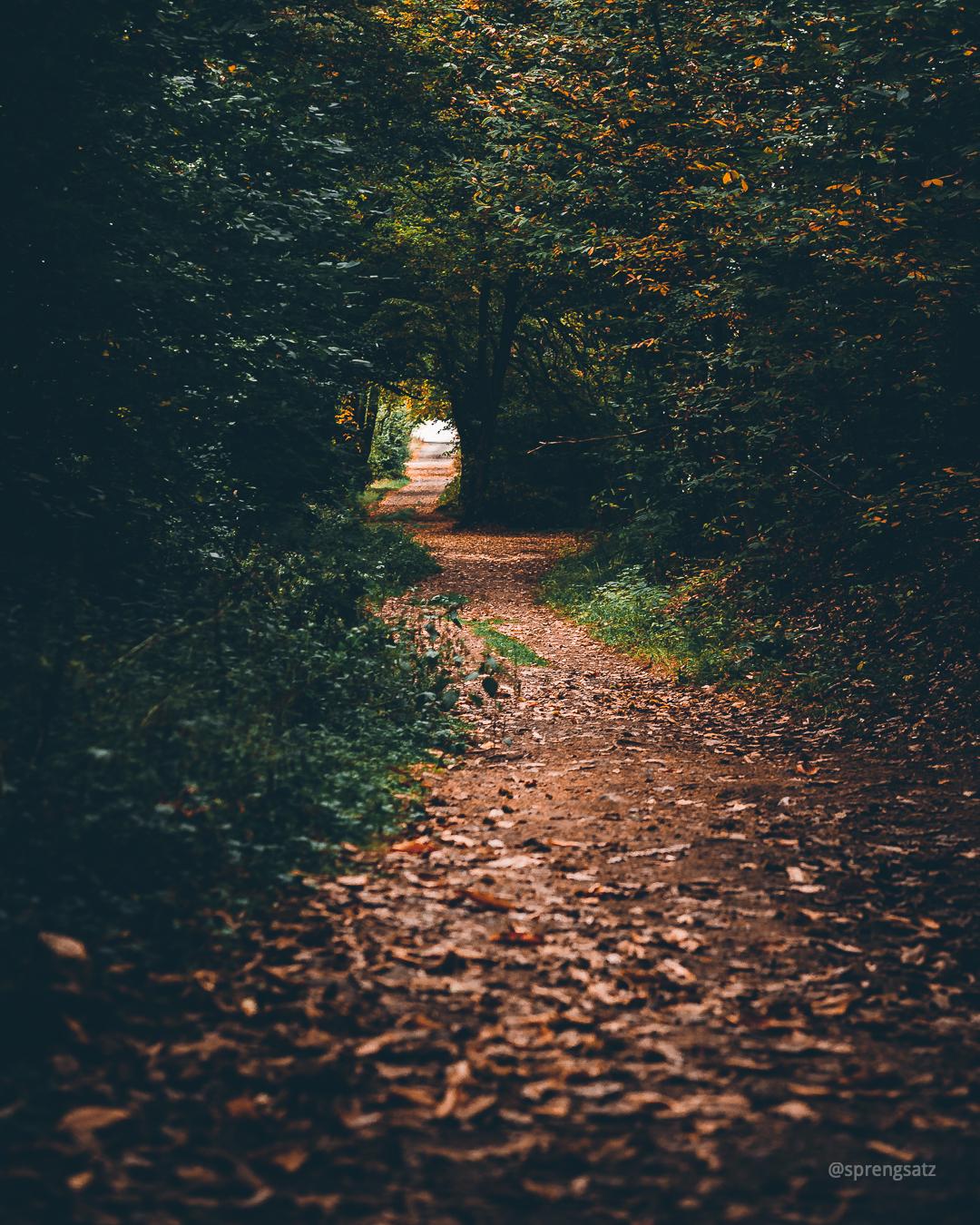Wanderweg im herbstlich gefärbten Göllheimer Wald