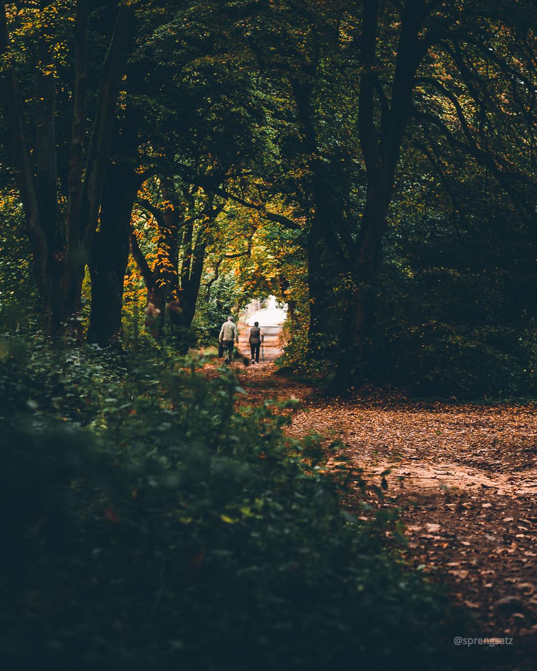 Ehepaar im Rentenalter spaziert durch den herbstlich gefärbten Göllheimer Wald