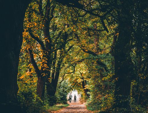 206/365 Romantik im Göllheimer Wald