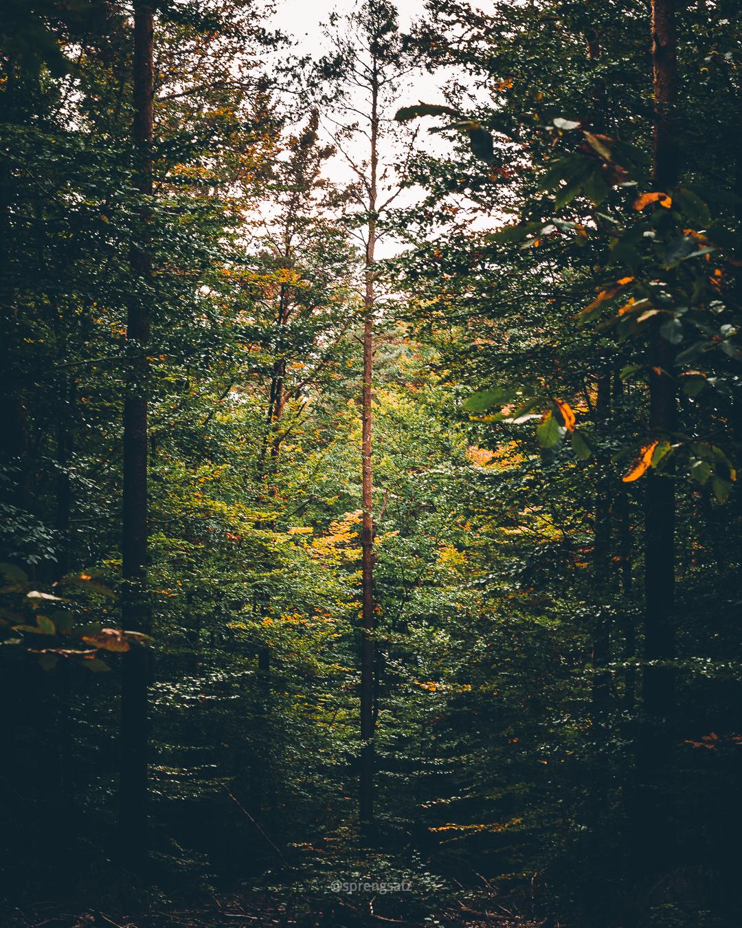 Lichtung umgeben von Bäumen des Göllheimer Waldes