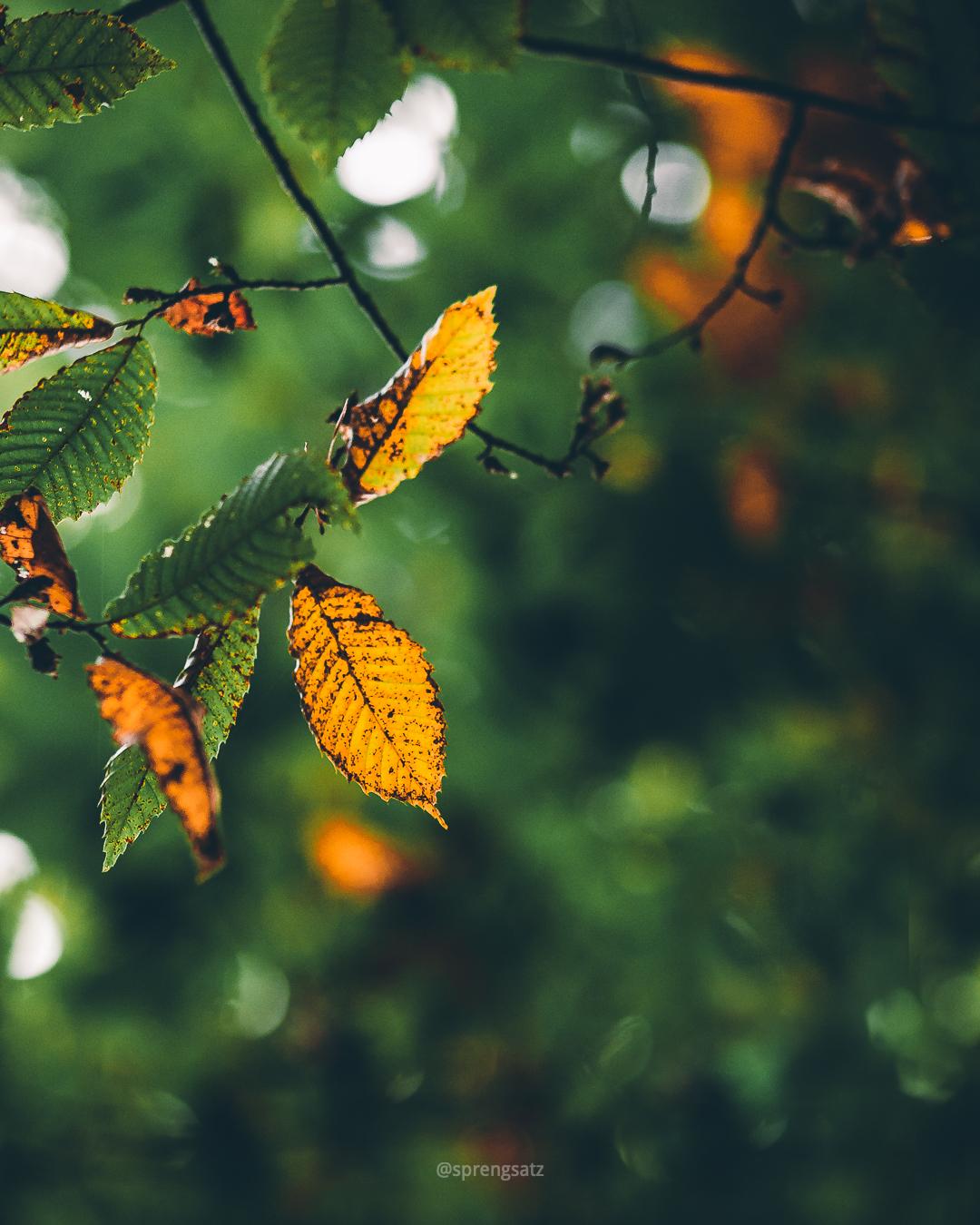 Bunt gefärbtes Blattwerk im Göllheimer Wald, passend zur Herbststimmung
