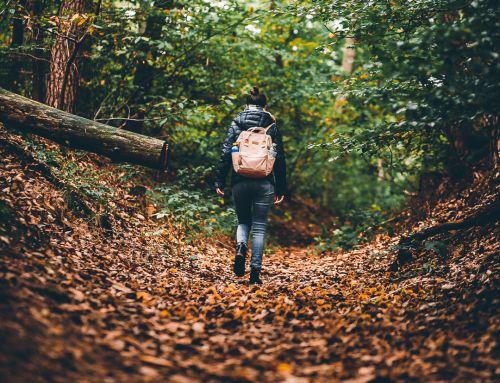 209/365 Unterwegs im Göllheimer Wald (Kriegsberghütte)