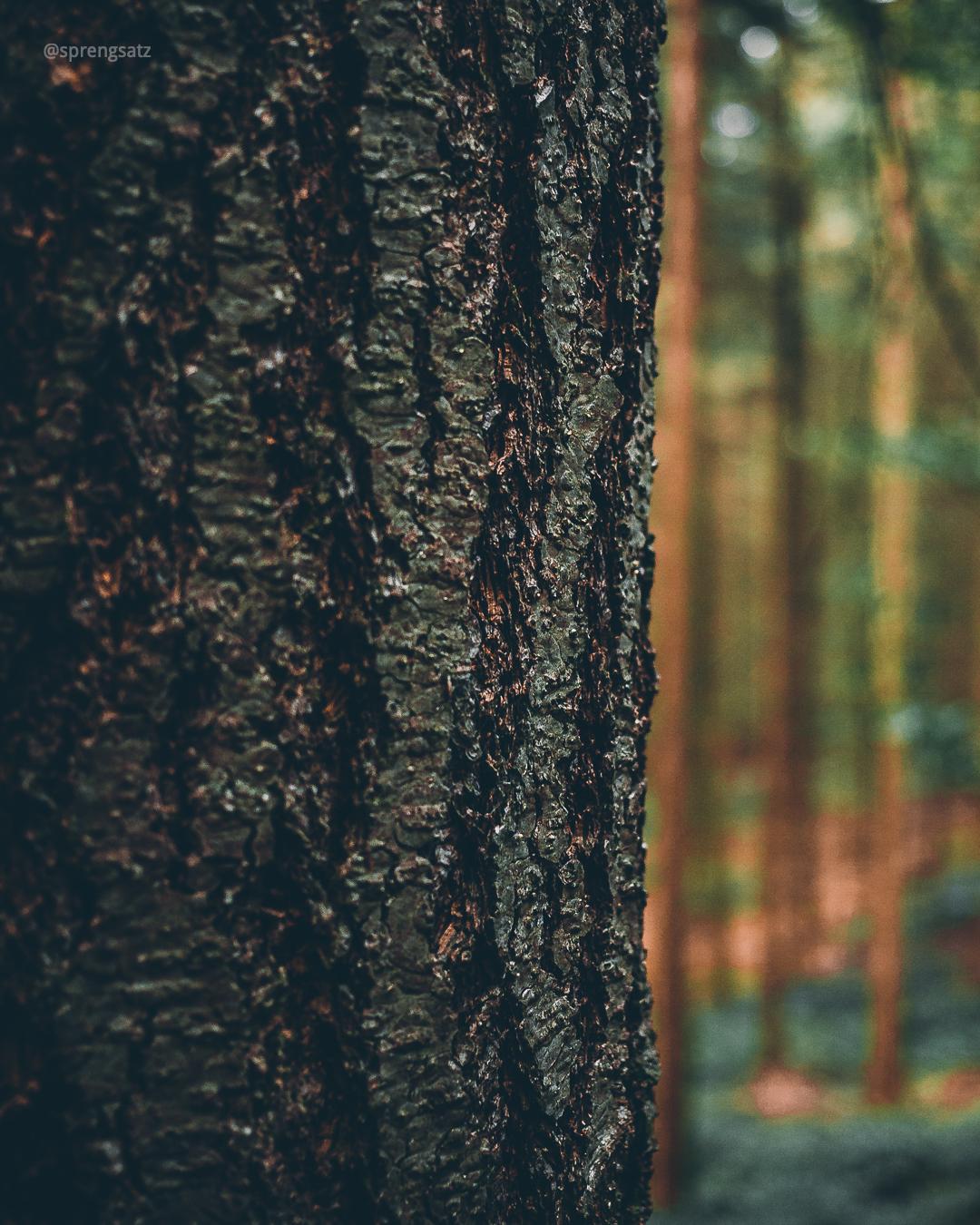 Detail einer Baumrinde