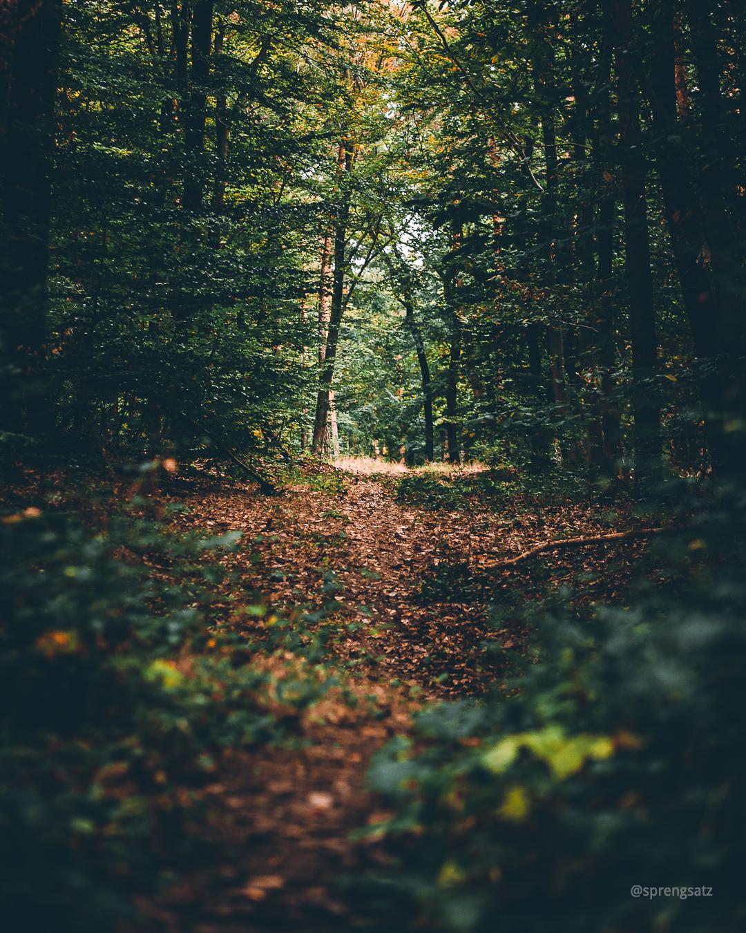 Lichtung im Göllheimer Wald, nahe der Kriegsberghütte