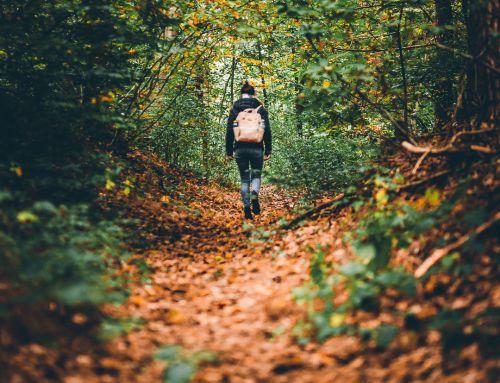 207/365 Wanderung im Göllheimer Wald