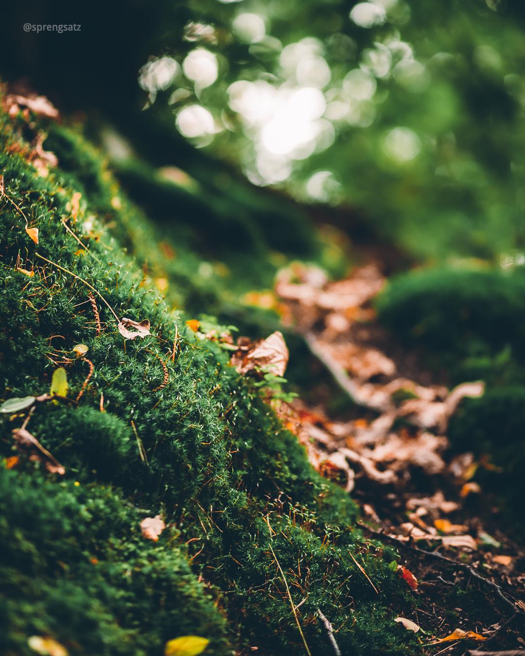 Moos und Laub im Göllheimer Wald