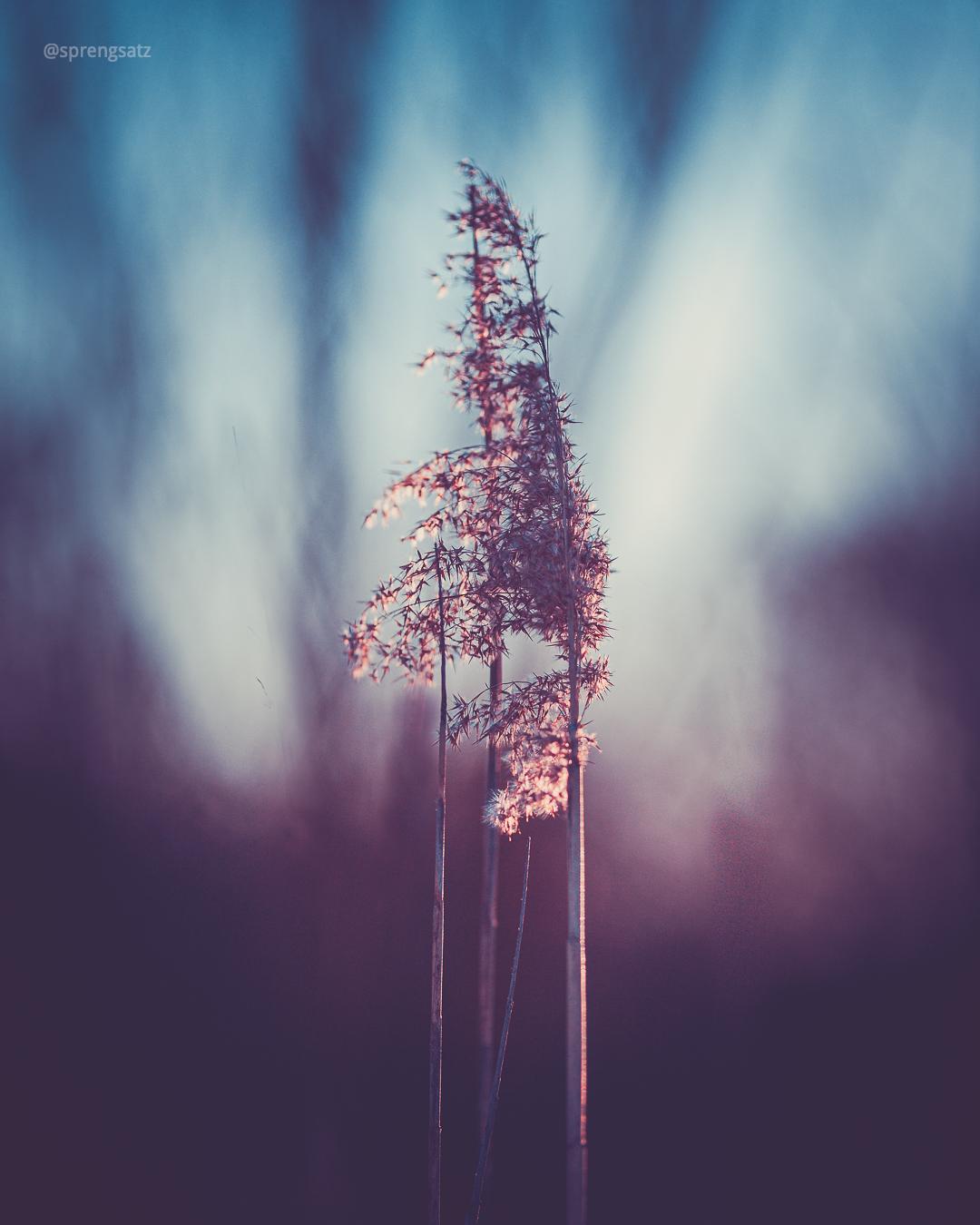 Pflanze vor unscharfem Hintergrund