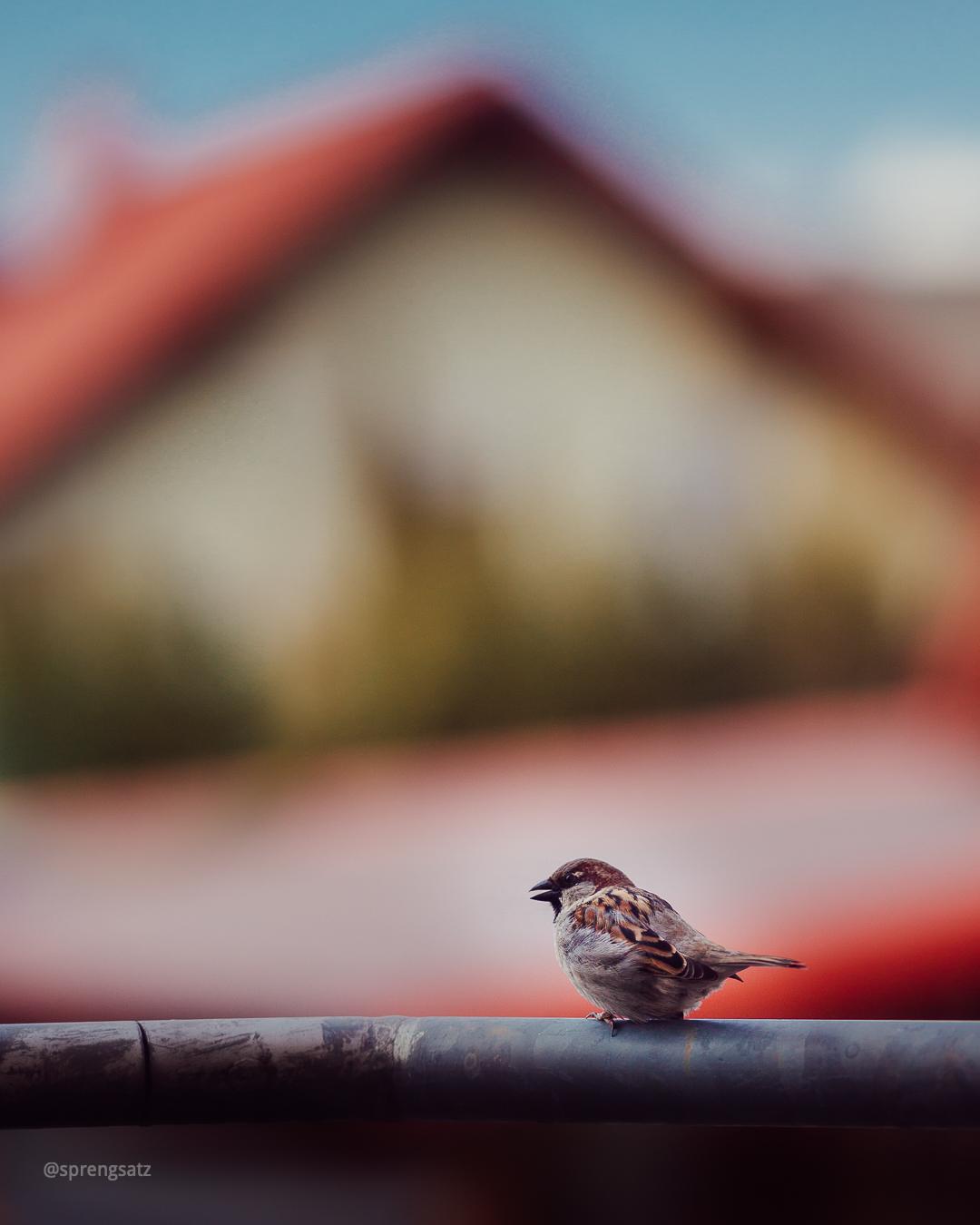 Ein Vogel sitzt auf einem Geländer